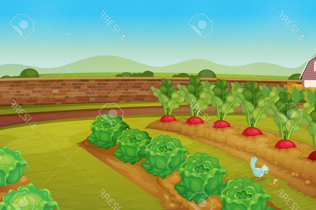 1300x865 Best Hd Cartoon Vegetable Garden Vector Library Free Vector Art