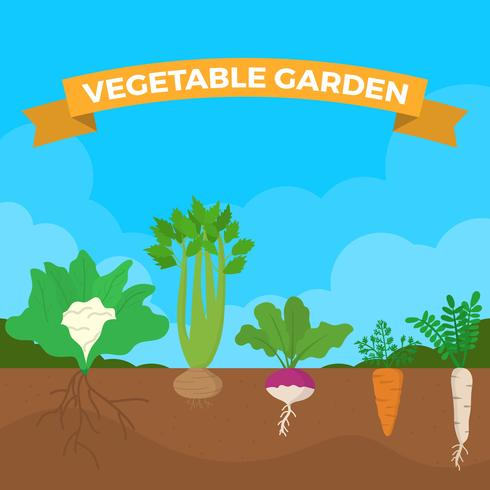 490x490 Flat Vegetable Garden Vector Illustration