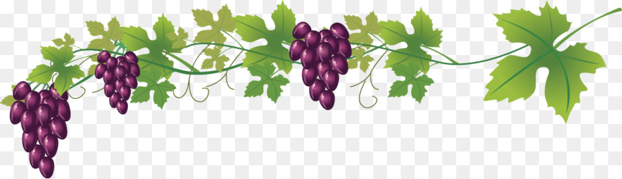900x260 Wine Common Grape Vine Royalty Free Clip Art