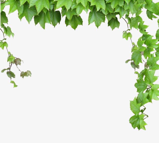 650x588 Leaves And Vines, Green Leaves, Vine, Vector Png And Vector For