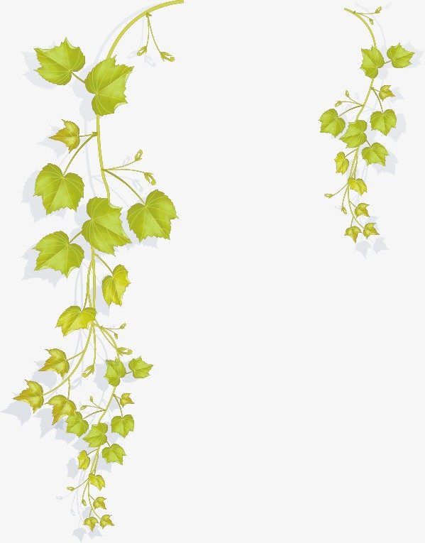 599x765 Vine And Branches Png Transparent Vine And Branches.png Images