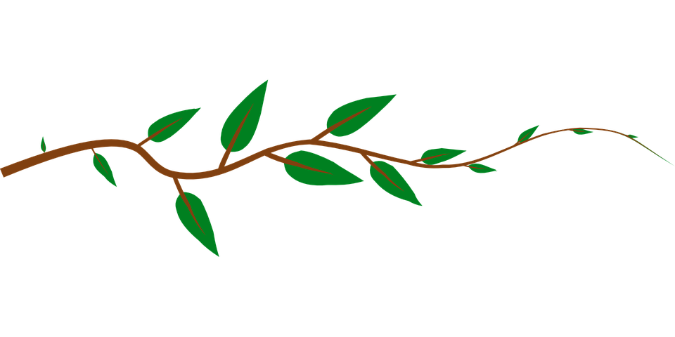 960x480 Collection Of Free Vines Vector Transparent. Download On Ubisafe