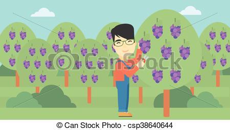 450x255 Farmer Collecting Grapes Vector Illustration. An Asian Farmer