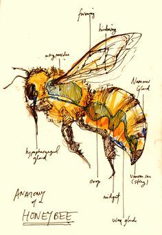 Vintage Bee Vector At Getdrawingscom Free For Personal Use