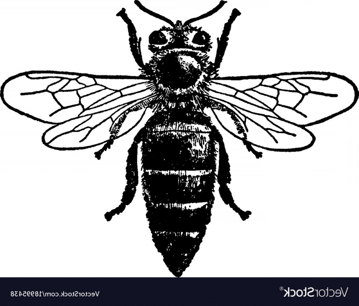 1200x1023 Queen Honey Bee Vintage Vector Geekchicpro