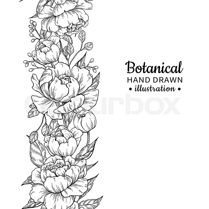 800x800 Floral Seamless Vintage Border. Vector Peony And Roses Botanical
