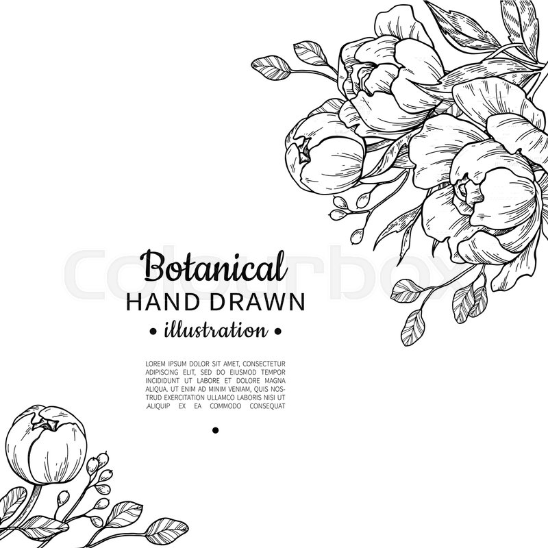 800x800 Vintage Flower Vector Frame Drawing. Peony, Rose, Leaves And Berry