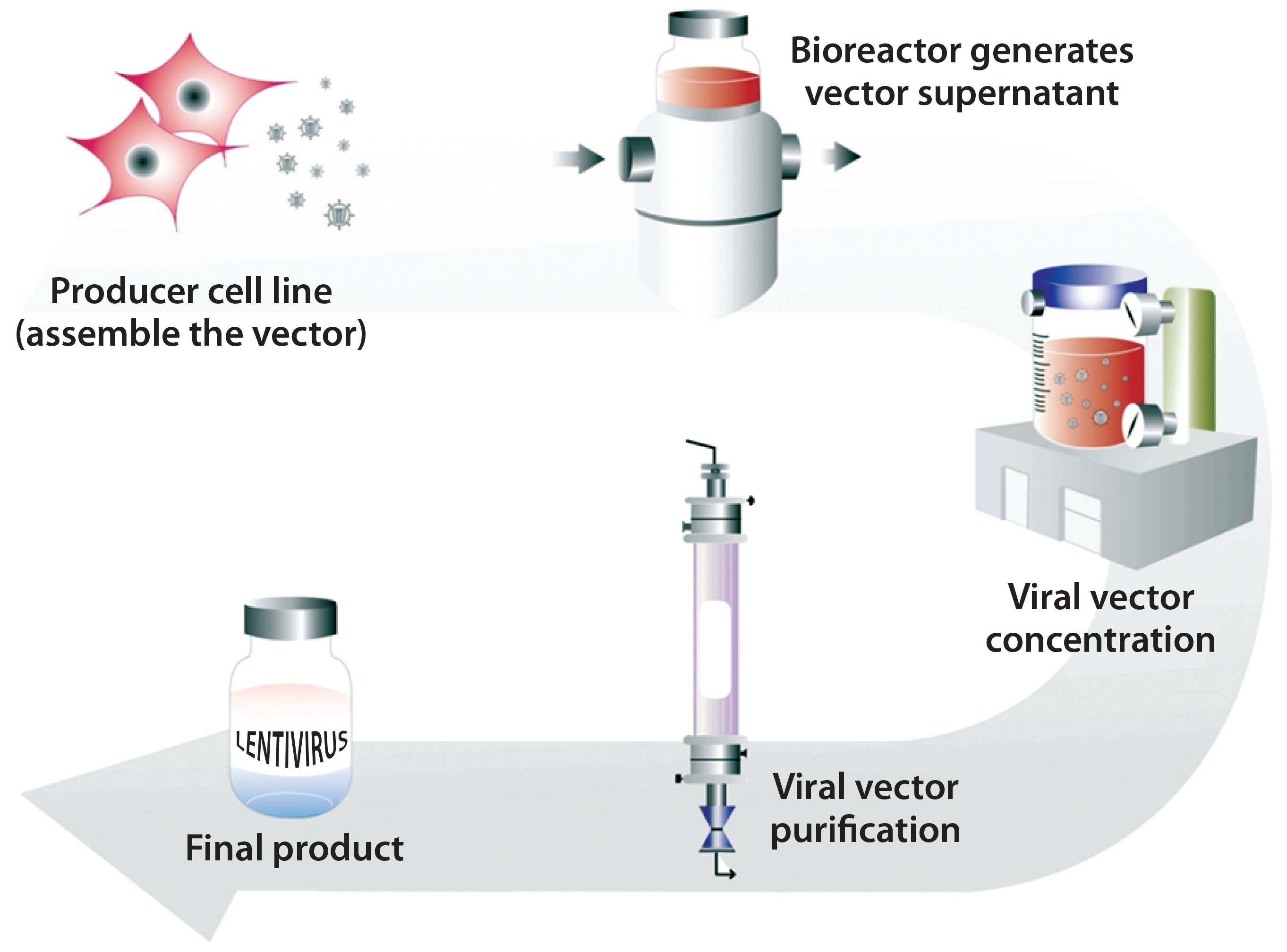 2725x2016 Cell Delivered Gene Therapy This Viral Vector Manufacturing