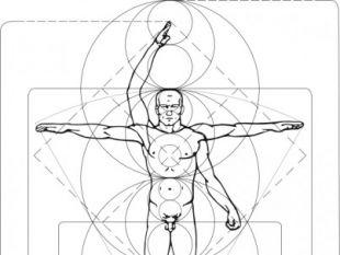 310x233 Vitruvian Man Vector. Free Vectors Ui Download