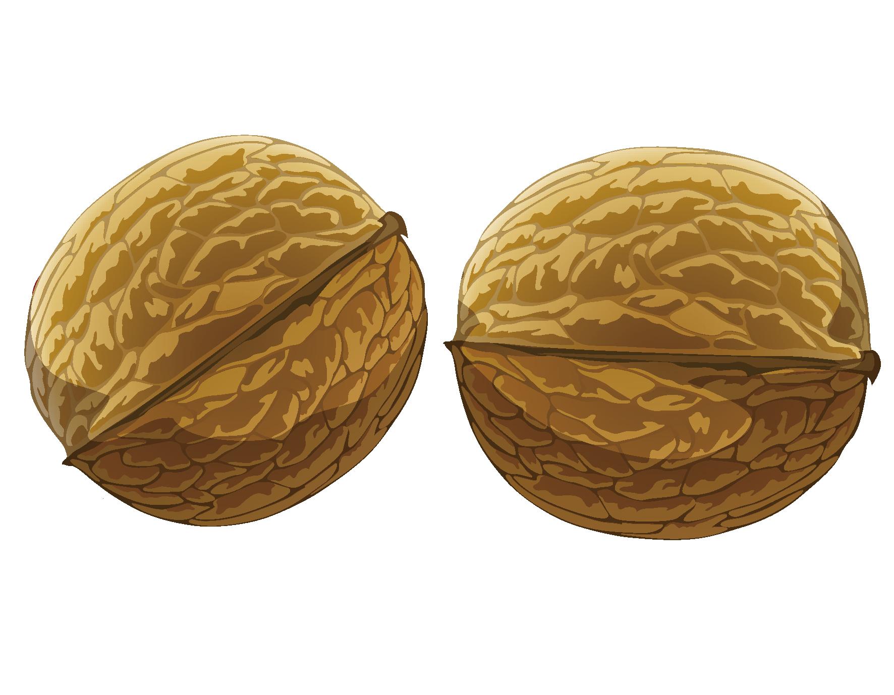 1772x1378 Cartoon Nut Walnut Vector Element Free Download Ai Files