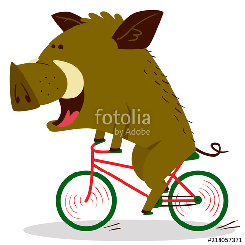 500x500 Cute Boars Or Warthog Character Riding A Bicycle. Vector