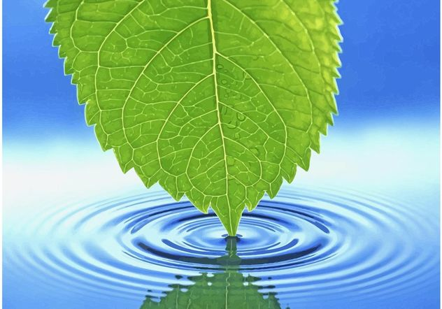 632x442 Green Leaf Water Ripple Free Vector Download 145643 Cannypic