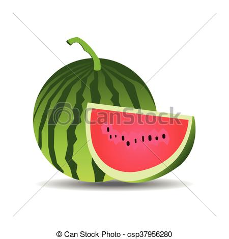450x470 Watermelon Vector.