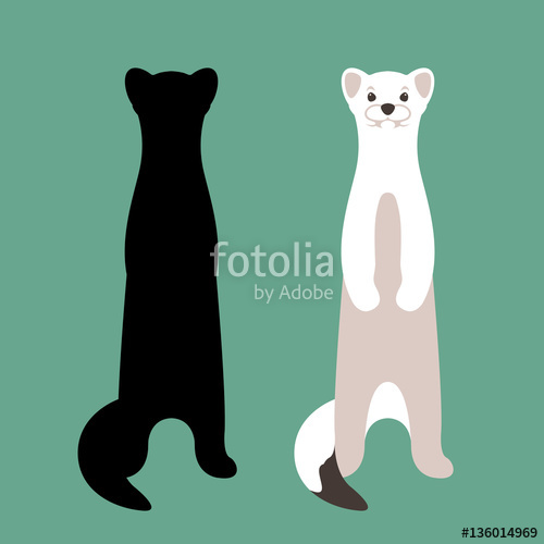 500x500 Weasel Vector Illustration Style Flat Set Silhouette Stock Image