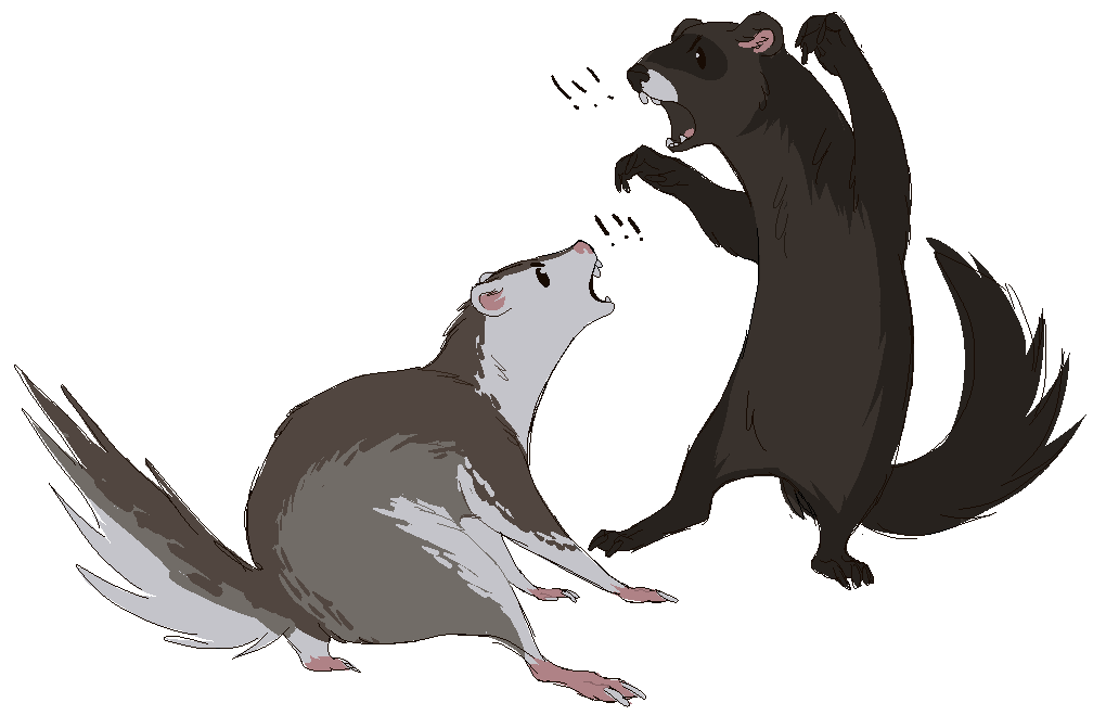 1020x671 Collection Of Free Weasel Drawing Gray. Download On Ubisafe