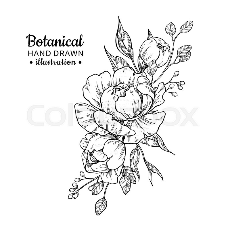 800x800 Vintage Flower Bouquet. Vector Drawing. Peony, Rose, Leaves And