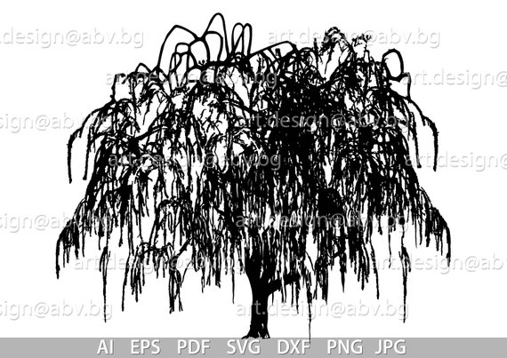 570x403 Vector Weeping Willow Tree Salix Babylonica Ai Png Pdf Etsy