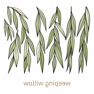 300x300 Watercolor Willow Tree Pattern Vector Orangiausa