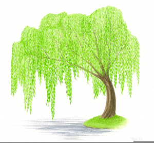 300x278 Weeping Willow Clipart Free Images