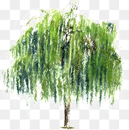 260x261 Weeping Willow Tree Png, Vectors, Psd, And Clipart For Free