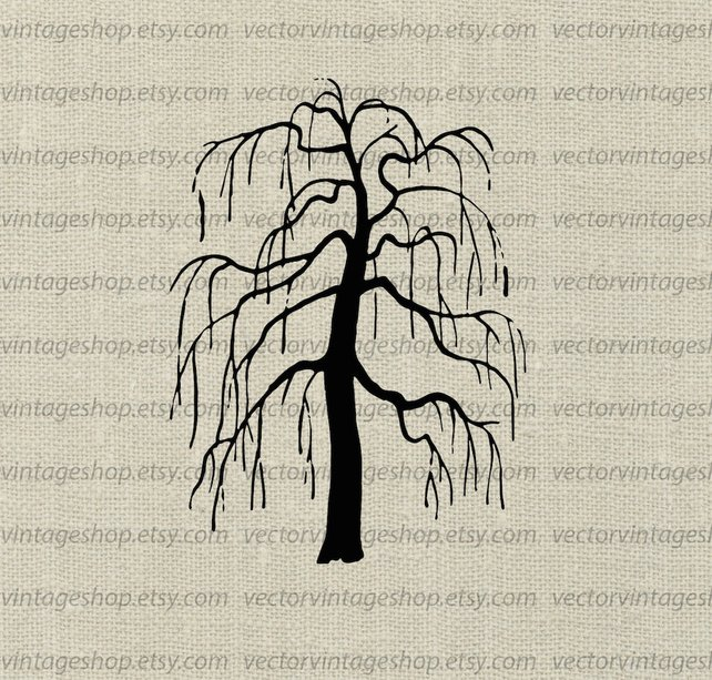 642x613 Weeping Willow Tree Vector Clipart Bare Tree Silhouette Clip Etsy