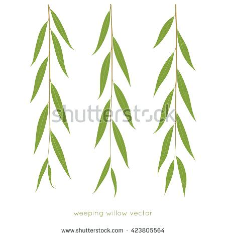 450x470 Weeping Willow Twigs Tree Branches Various Leaves Shape Isolated