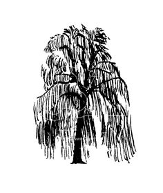 236x279 Weeping Willow Clip Art The Art Of Learning