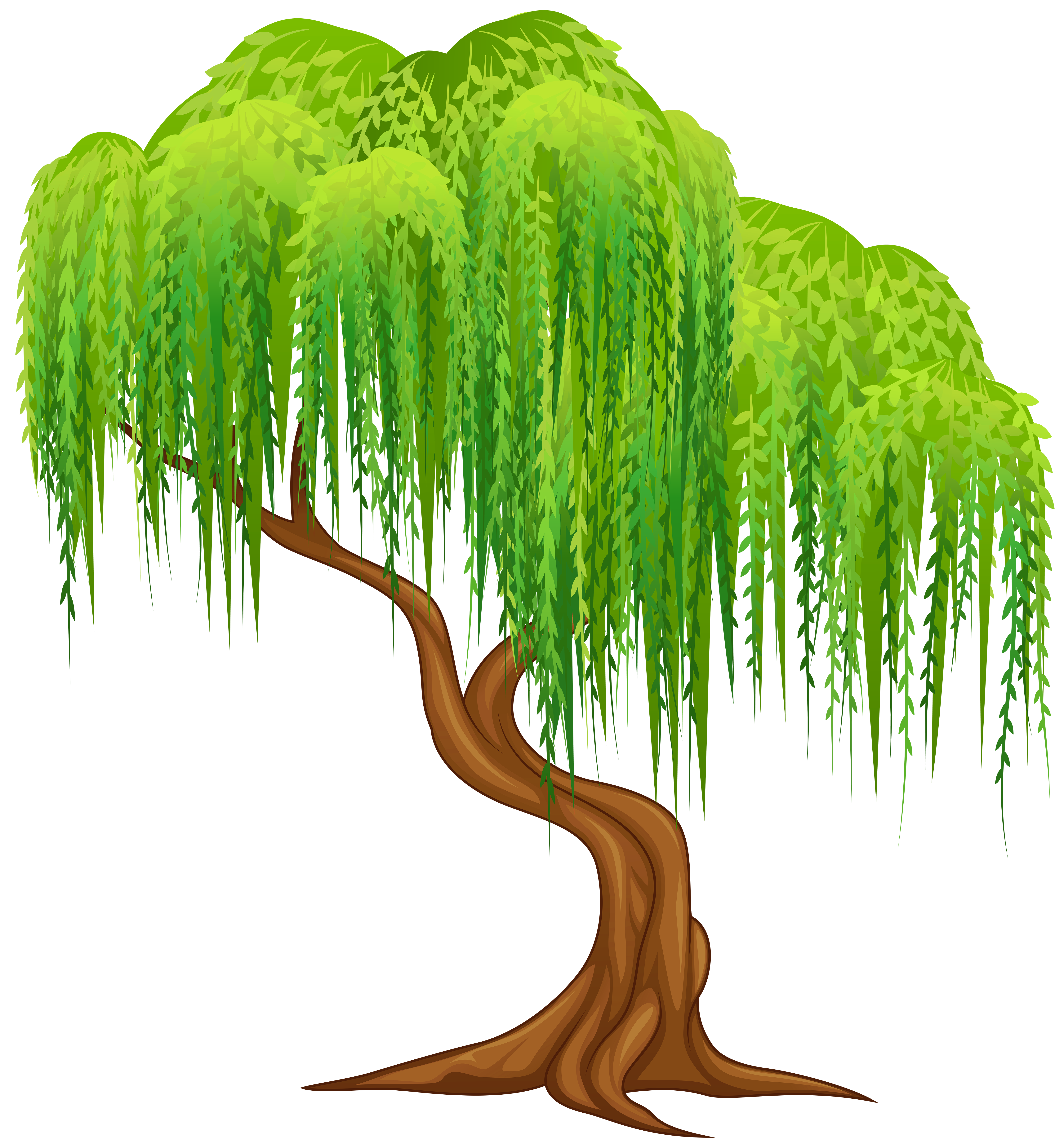 5559x6000 Weeping Willow Tree Png Stock