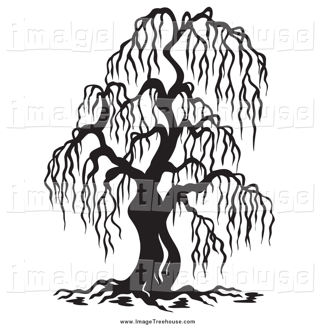 1024x1044 Black And White Willow Tree And A Fox Clipart