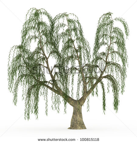 450x470 Chinese Weeping Willow Clipart