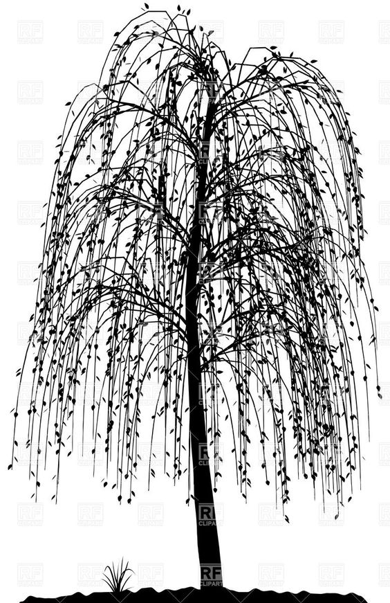 564x871 High Detailed Willow Tree Silhouette Download Royalty Free Vector