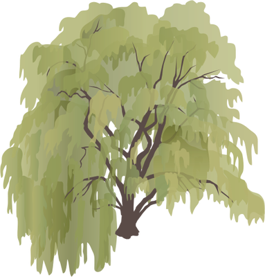Weeping Willow Vector