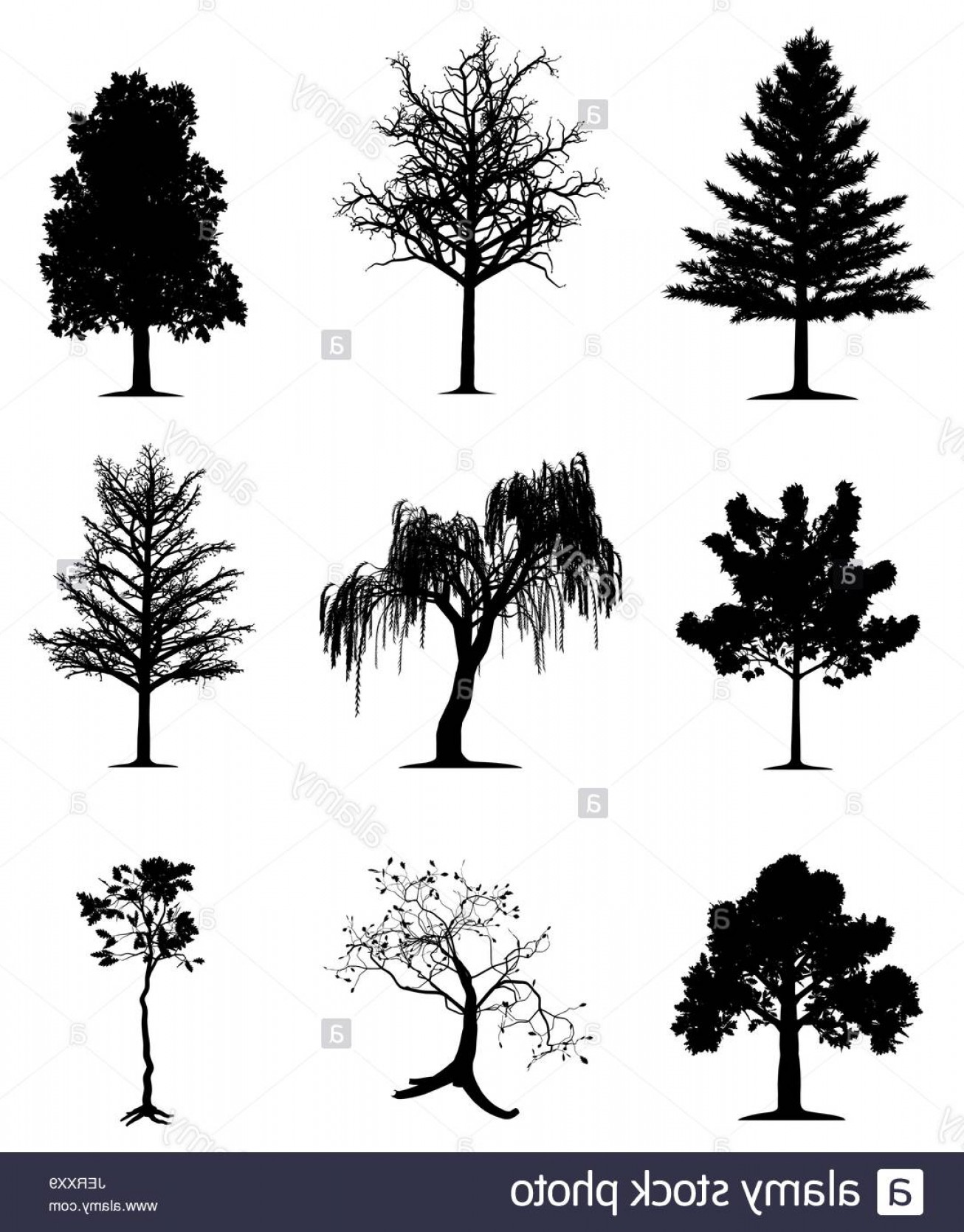1306x1668 Stock Photo Tree Trees Pine Oak Silhouette Maple Weeping Willow