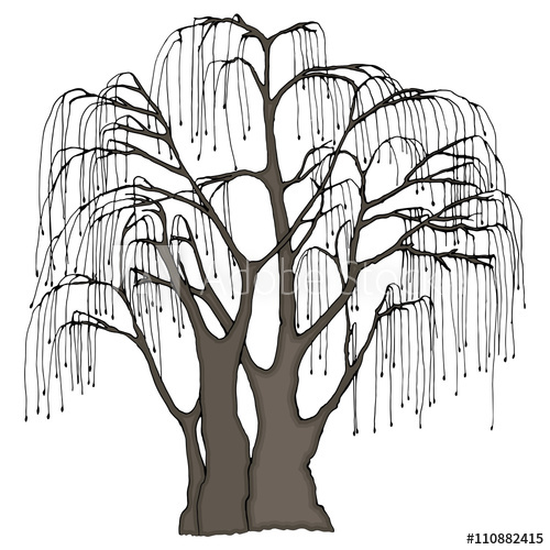 500x500 Big Tree With Long Hanging Twigs. Weeping Willow Or Other. Color