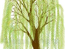 220x165 Willow Tree Clipart Vector Illustration Of A Weeping Willow Tree