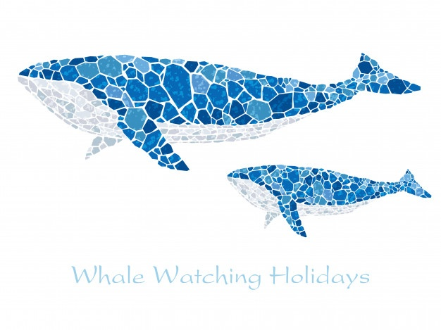 626x469 Whale Vectors, Photos And Psd Files Free Download
