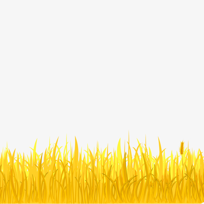 650x651 Golden Wheat And Wheat Field, Wheat Vector, Wheat, Wheat Field Png