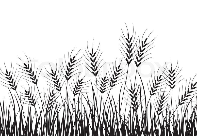 800x553 Grass And Ears, Vector Illustration Stock Vector Colourbox
