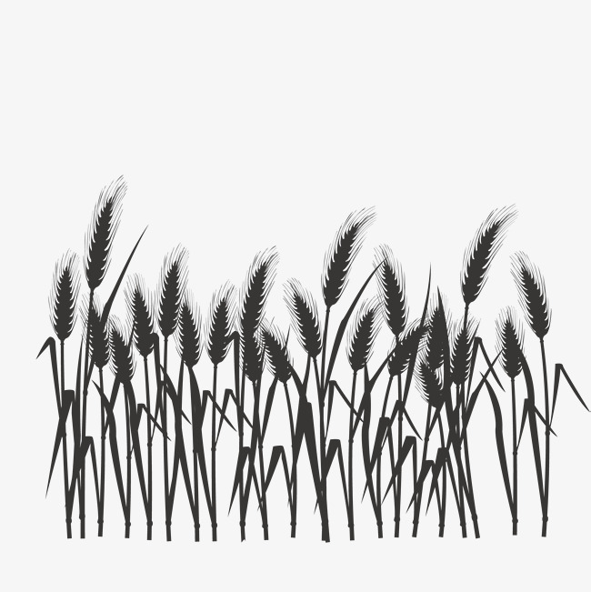 650x651 Silhouette Of Wheat Field, Silhouette Vector, Wheat Vector, Vector