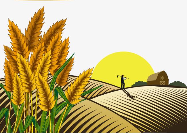 650x461 Sunset Wheat Field Farmer, Sunset Vector, Wheat Vector, Decoration