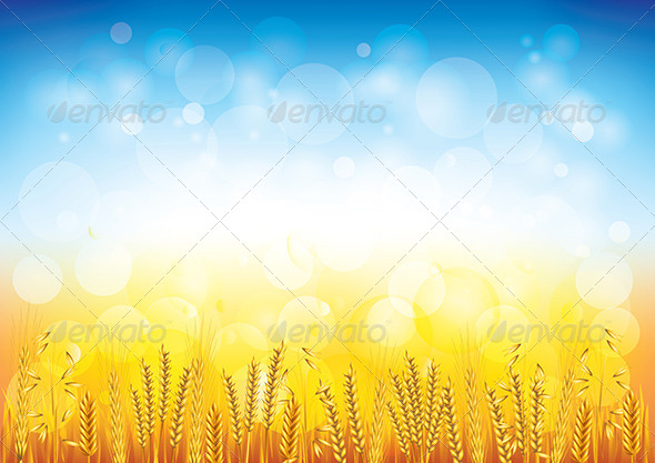 590x417 Wheat Field Vector Background By Andegro4ka Graphicriver