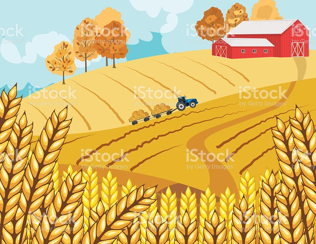 1024x791 Wheat Barn Clipart, Explore Pictures