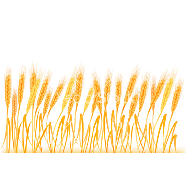 380x400 Wheat Clipart Feild