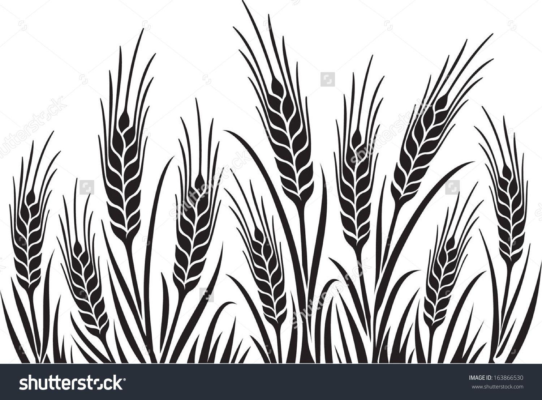 1500x1106 Barley Illustration Field Of Wheat, Barley Or Rye Vector Visual