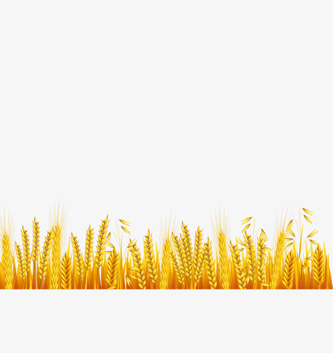 650x689 Cartoon Wheat, Wheat, Wheat Field, Wheat Png And Vector For Free