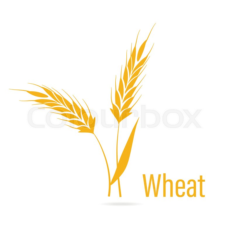 800x800 Gluten Free Icon. Ears Of Wheat, Vector Illustration, Icon Of