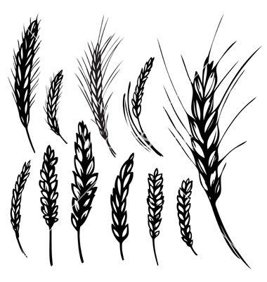 380x400 Rye Wheat Vector Art
