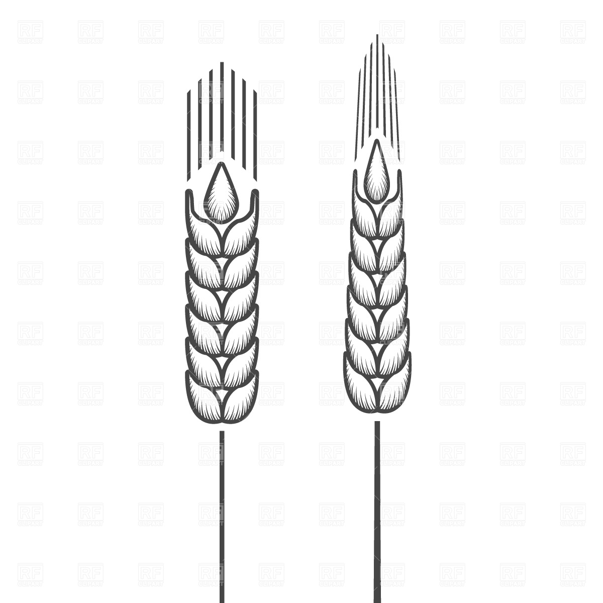 1200x1200 Stylized Ear Of Wheat Vector Image Vector Artwork Of Plants And