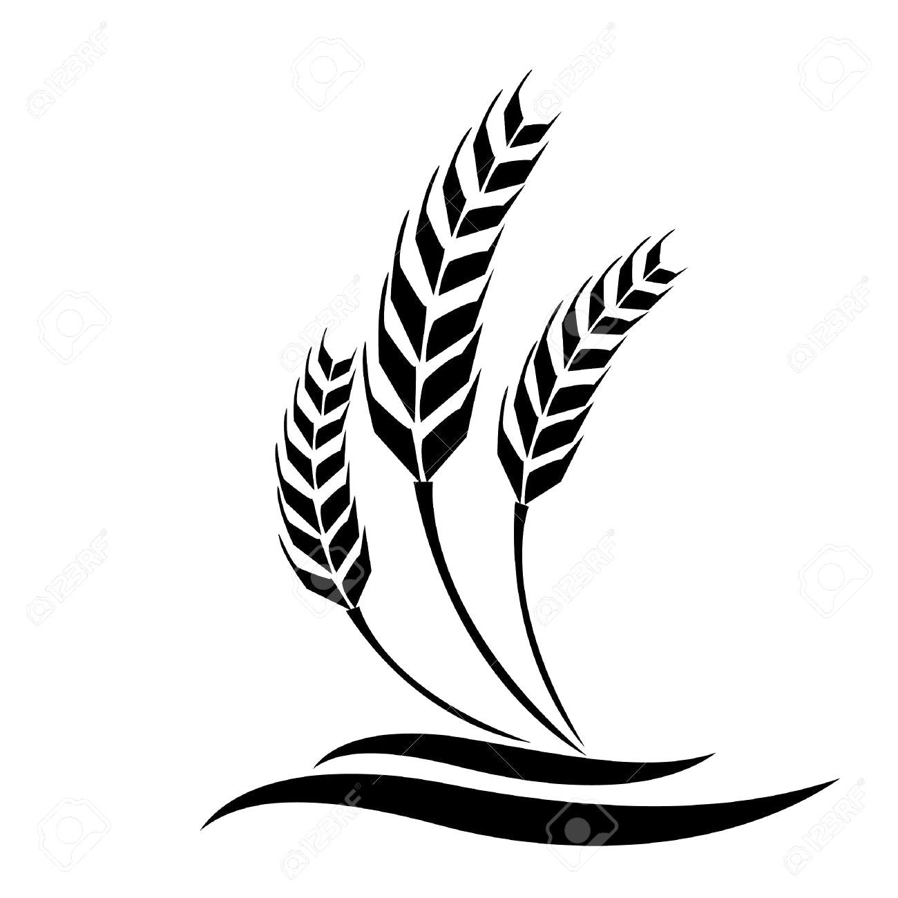 1300x1300 32111459 Wheat Vector 12
