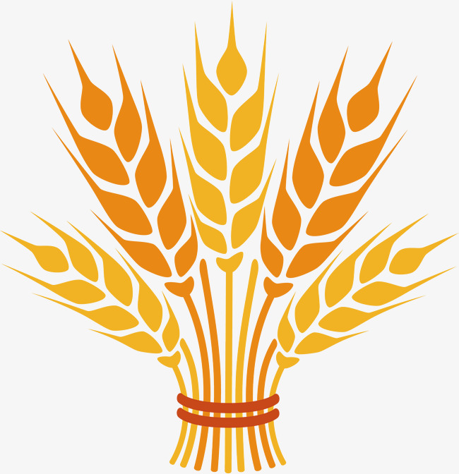 650x672 Wheat Png Vector Element, Wheat Vector, Wheat Vector, Crop Png And